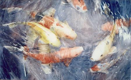 Koy-fish-2